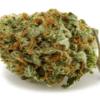 Peyote Critical  – 10 Grams