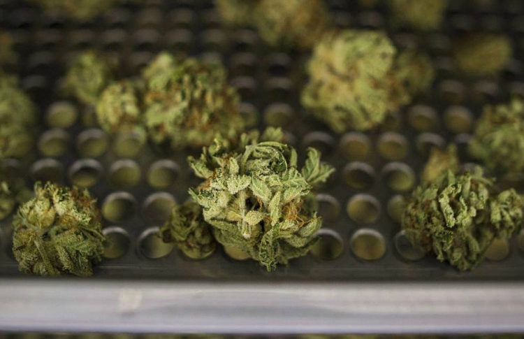 Cannabis Stocks Break Their Three-Week Winning Streak, Despite Positive Pot News in U.S.