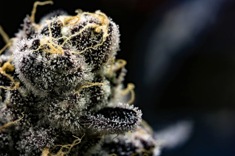 The DEA Has A List With The Newest Slang Terms for Cannabis: Fattie, My Brother And Many More