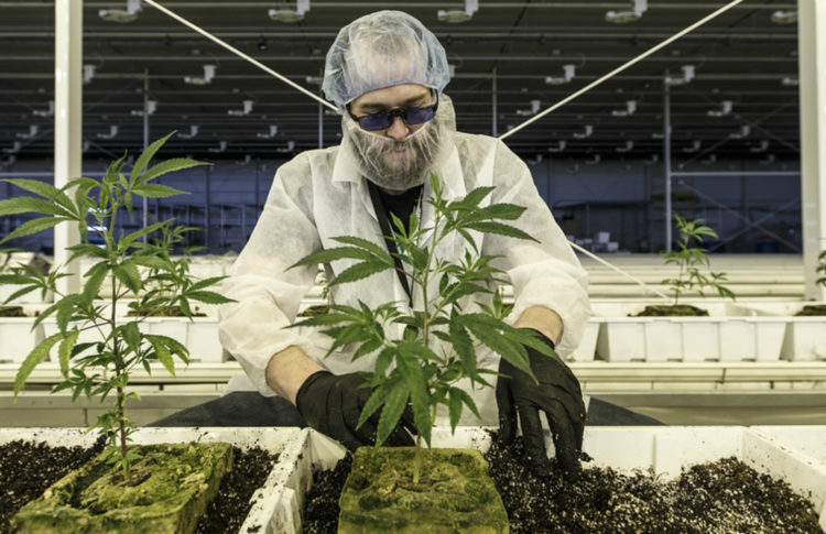 Canada's Black Market for Cannabis Remained Strong in Fourth Quarter