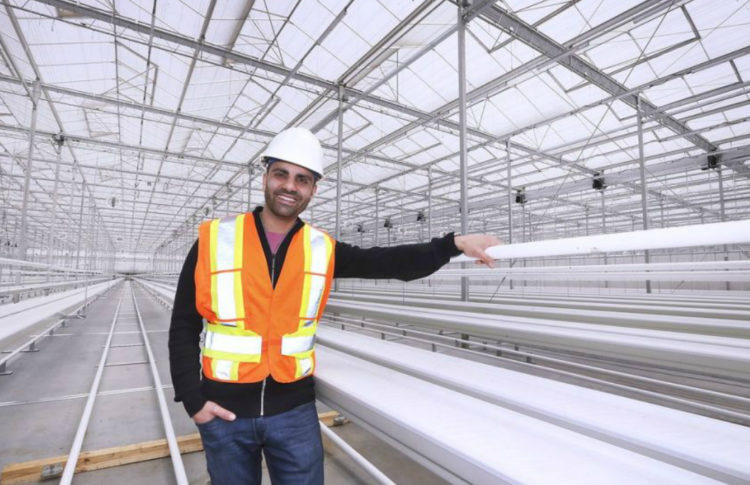 Another Cannabis Giant Planting Roots in Leamington
