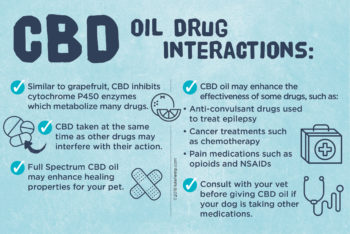CBD for Dogs: Drug Interactions to Be Aware Of