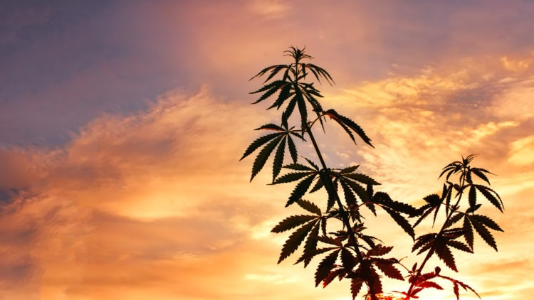 Mexico Plans To Legalize Recreational Cannabis Before October 2019