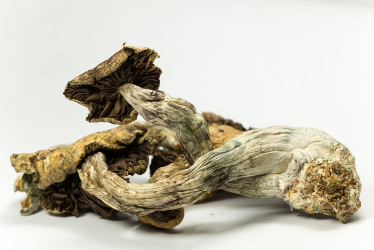 Denver Becomes First State To Decriminalize Magic Mushrooms
