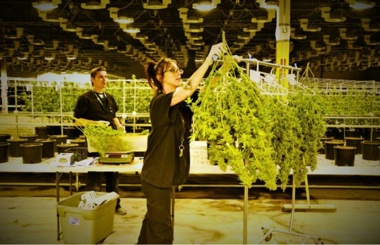 How Tough Can It Be To Start A Cannabis Franchise?