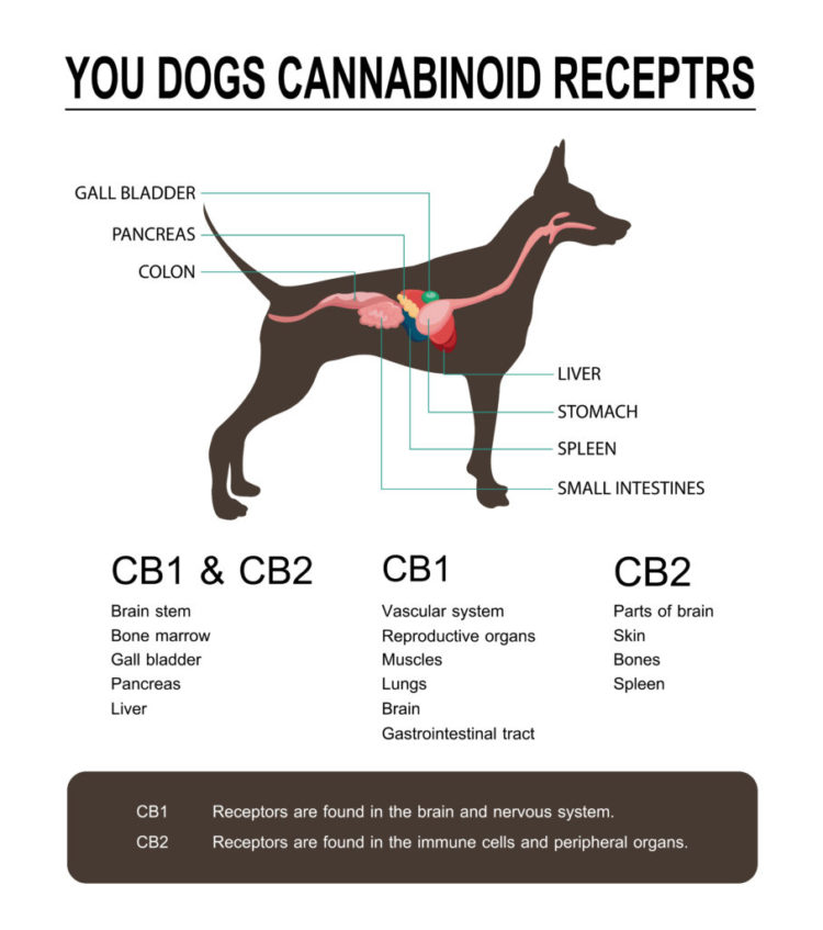 The Top 7 Best CBD Dog Treats You Can Buy In 2019
