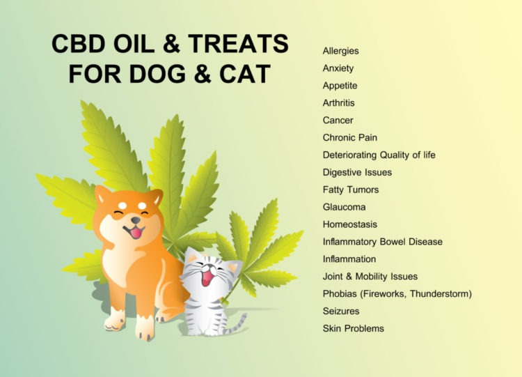 CBD Oil for Cats:  Let's Take A Look At 7 Potential Health Benefits