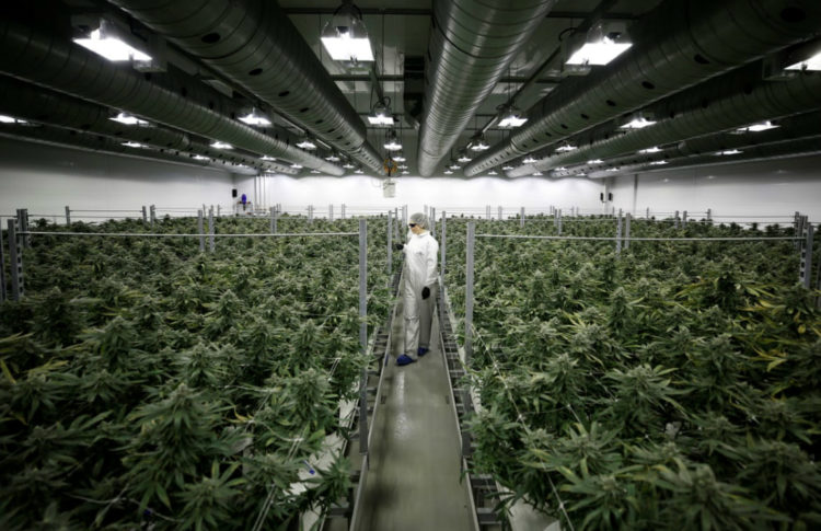 'There's No Opposition Now': How a Quiet Canada Town Became a World Leader in Growing Weed