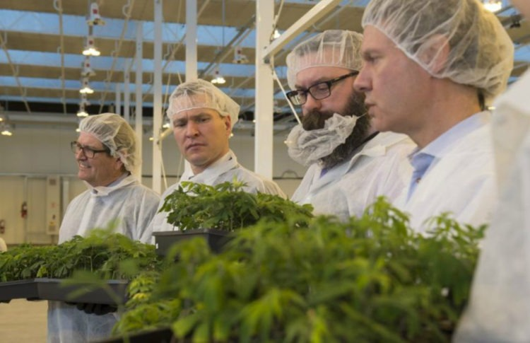 Aurora Cannabis Gets Licences for Two Outdoor Growing Facilities