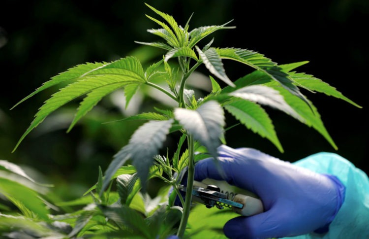Israeli College to Offer Degree Specializing in Medical Cannabis