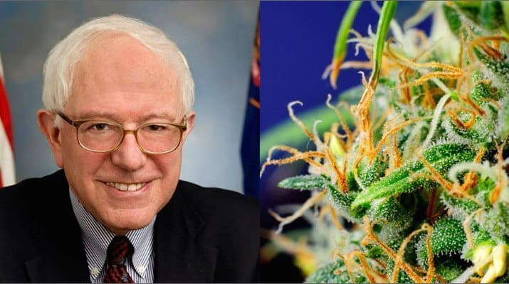 "Bernie Sanders: ""I Will Legalize Cannabis Through Executive Order"""