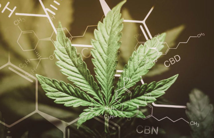 CBN is Another Cannabis Compound With Beneficial Properties