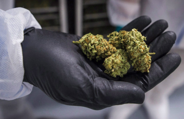 Cannabis Canada: Health Canada Suspends Second Pot Firm From Growing, Selling Legal Cannabis