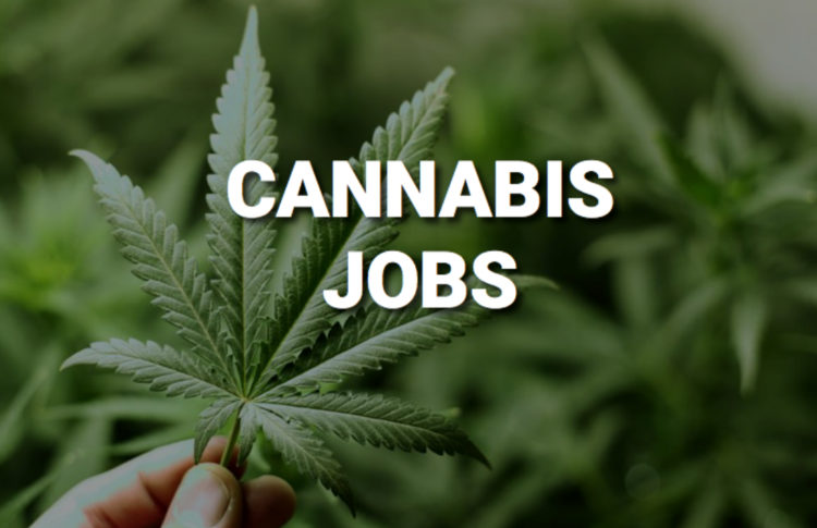 Thinking About a Career in Cannabis? Resilience, Creativity and Passion Are Prerequisites