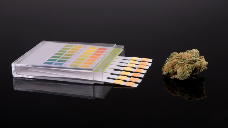Can Taking CBD Products Lead To Failing A THC Drug Test?