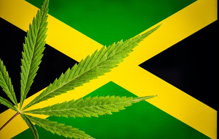 Jamaica Partnership With Harvard Institute to Help Island Cannabis Compete Worldwide