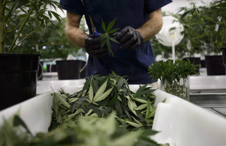 Returned Product a Hidden Challenge for Cannabis Companies