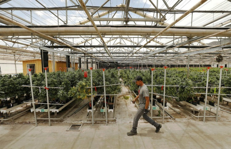 Labor Unions Flex Their Muscle in Fight With California Cannabis Industry