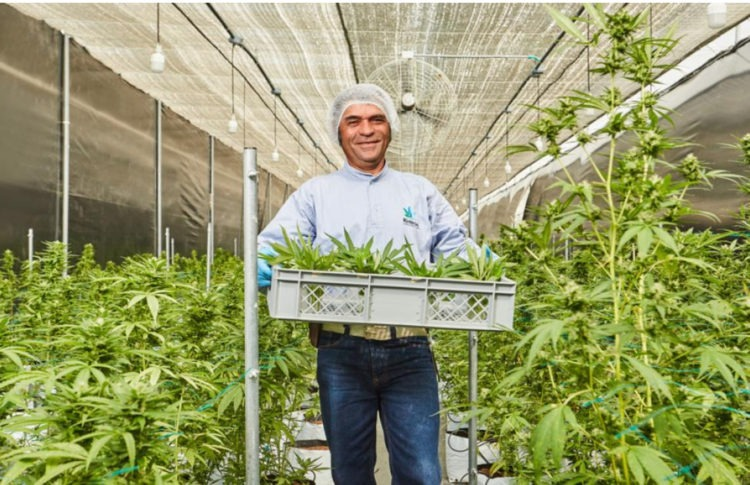 How COVID-19 Is Affecting Cannabis Companies in Colombia