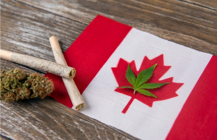 Here's How Canada Blew Its Chance to Be a Cannabis Leader