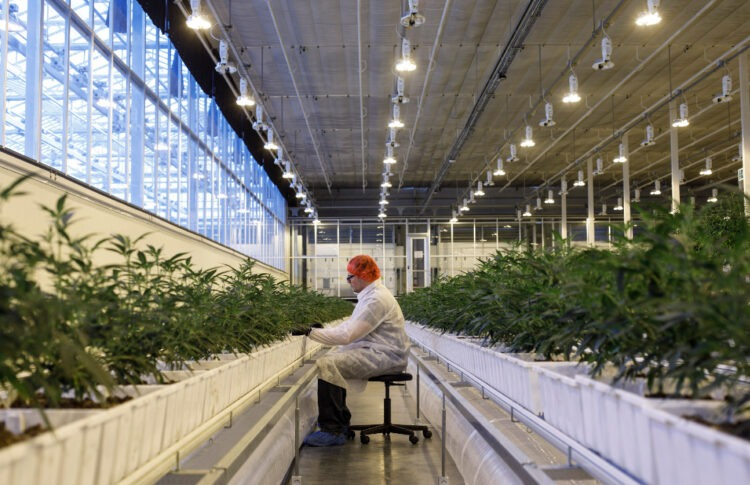 Aurora Cannabis is Laying Off Huge Swath of Workforce and Shutting Five Facilities