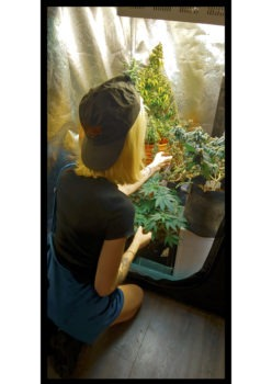 <div>Grow & Tell (Website Seeds Info with Big Bud Energy)</div>