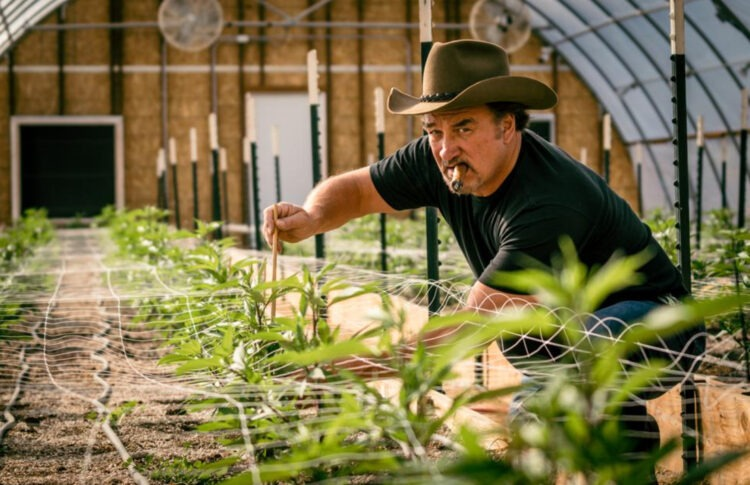 Jim Belushi's Path From Cannabis Farming To Reality TV