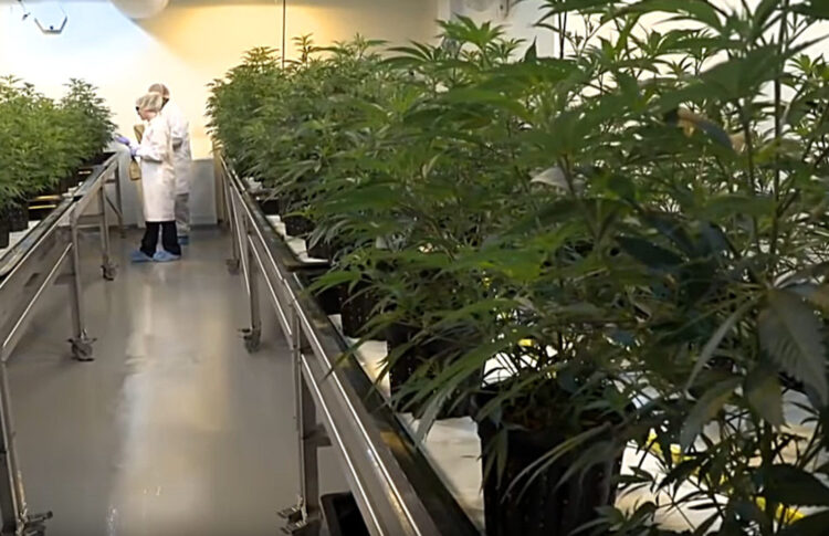 FSD Pharma Leaving Cannabis for COVID-19, Closing Medical Pot Facility in Cobourg, Ont.