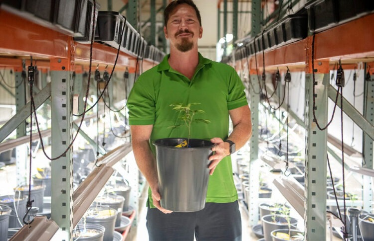 He Left His Job At Kellogg's HQ To Become A Commercial Cannabis Farmer In Springfield