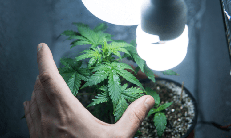 How To Create A Cheap Indoor Grow Setup For Weed