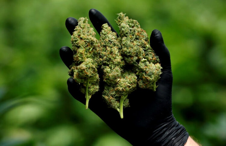 B.C. Unveils New Cannabis Sales Programs To Help Small, Indigenous Growers