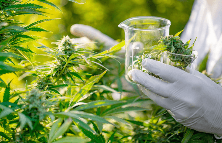 Parkinson's Patients Report Using Cannabis Largely for Symptom Relief in U.S. Survey