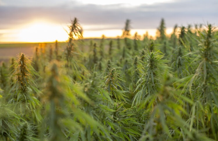 Hemp Opportunity Zones: A New Opportunity for Real Estate Investors