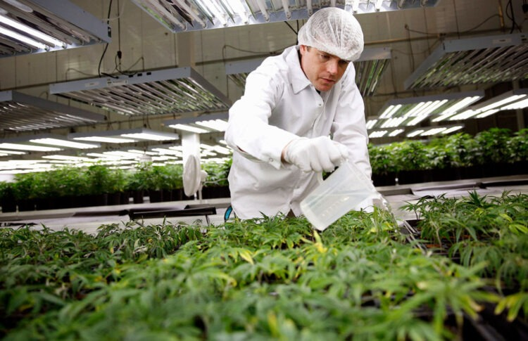 250,000 Americans Work In Legal Cannabis And Jobs Are 'Growing'