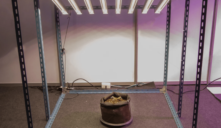 How to Build a DIY Grow Tent