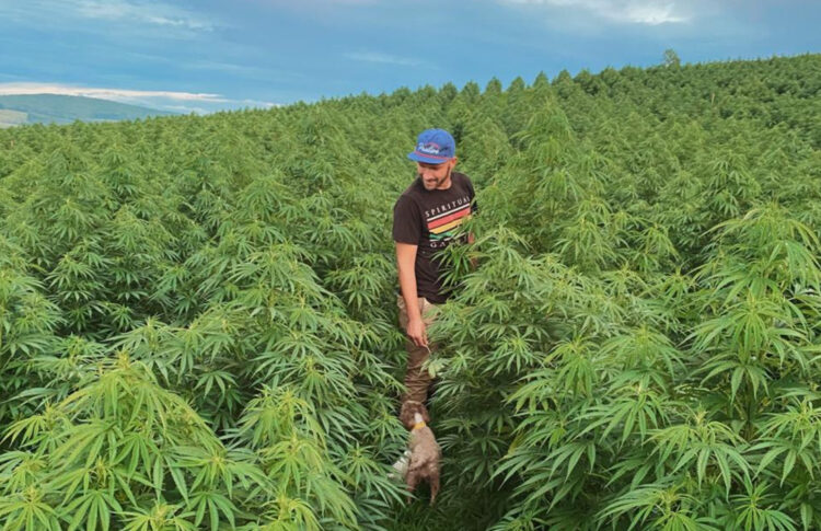 America Must Protect Its Craft Hemp And Cannabis Growers. Here's Why.