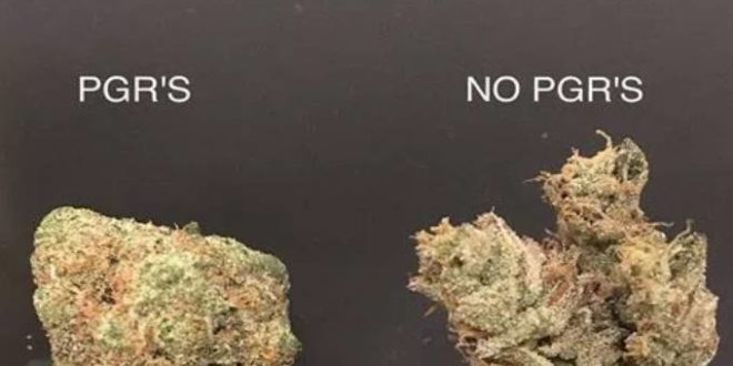 The Dangers of PGR Weed and How to Identify it
