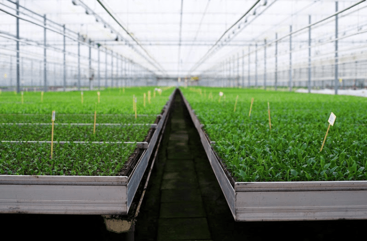 Netherland's BioTech Firm Perfect Plants Set Roots in Canada