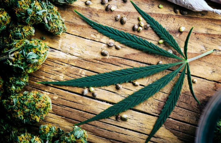 CBD, Cannabis And Hemp: What Is The Difference Among These Products?