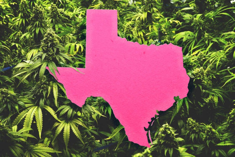 How Texans Fight for Medical Cannabis Access