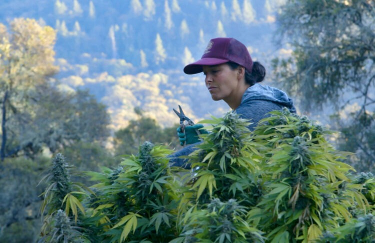 'Lady Buds' Documentary Explores The Rocky Path To Legal Cannabis