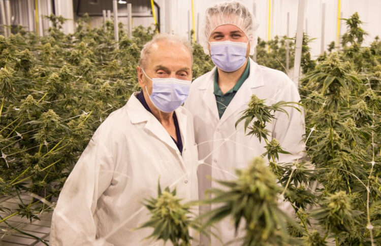 Regina Family Turns To Cannabis Cultivation To Save Their Business