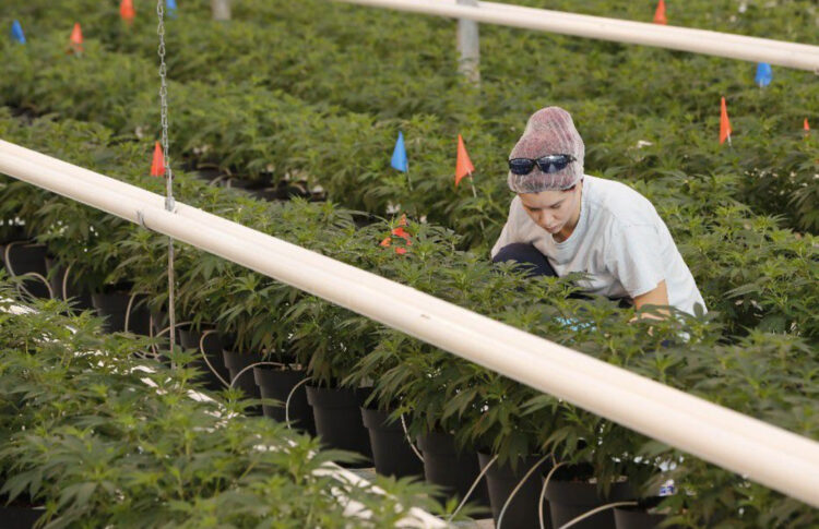 What Buffalo Niagara Can Learn From Canada's Cannabis Industry Experiment