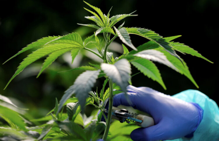 Patients Hopeful For France's Medical Cannabis Experiment