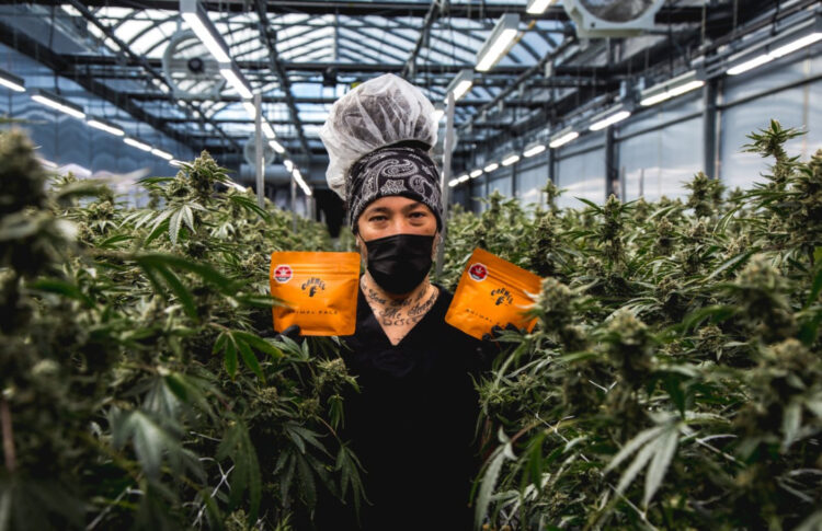 Oro-Medonte cannabis producer looking to hire up to 20 people